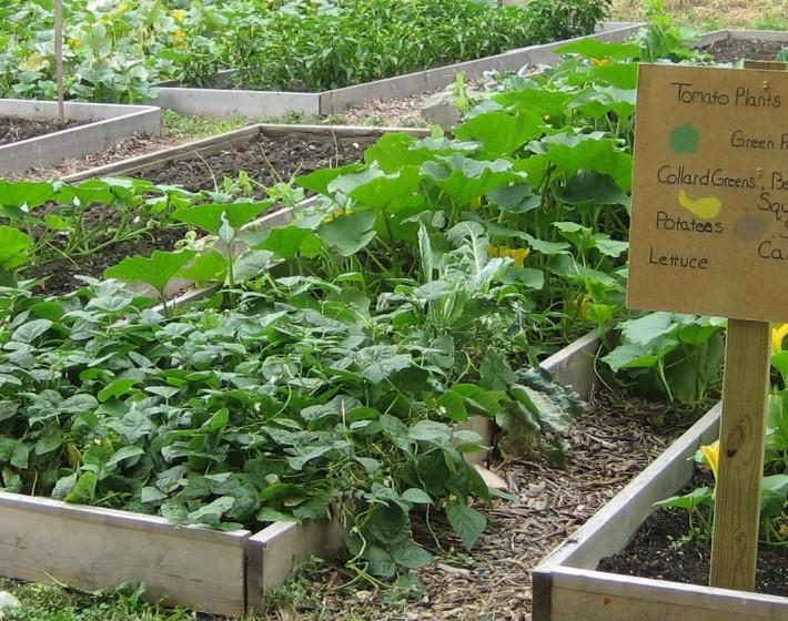 Workshop: Get Gardening