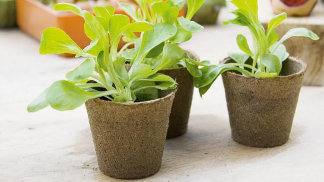 Pot plant 1